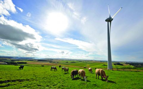 Cattle below wind turbine